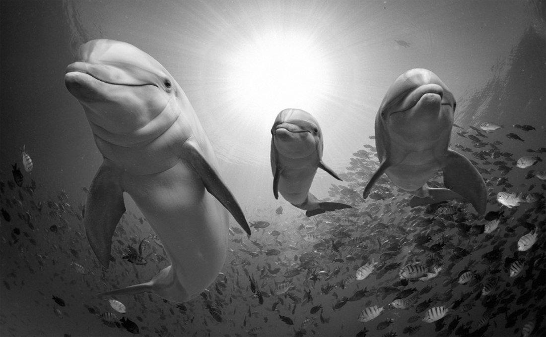 Tres simpáticos delfines llenos de vida dentro del mar.