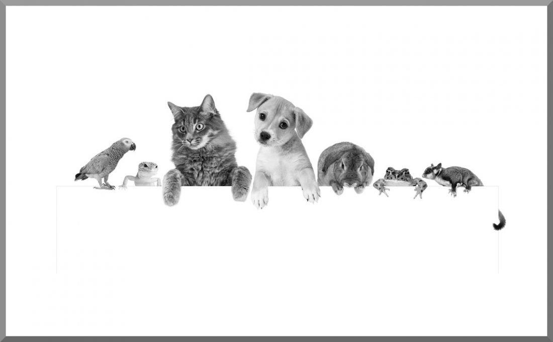 Muchos animales uno al lado del otro