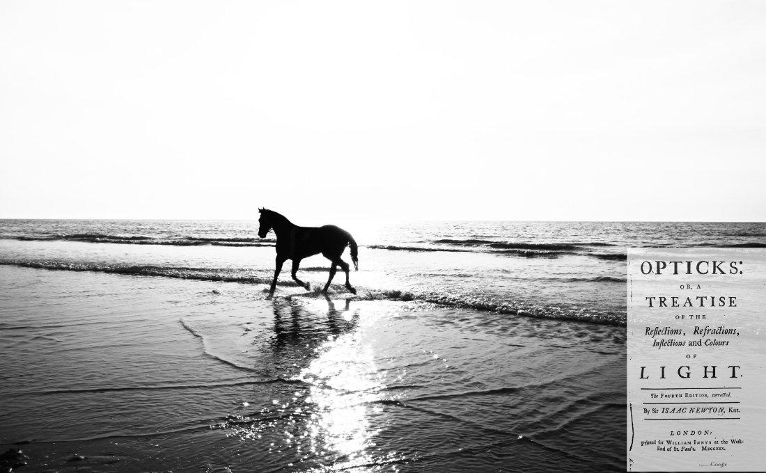 Caballo paseando por la orilla del mar recuerda a las palabras de Newton.