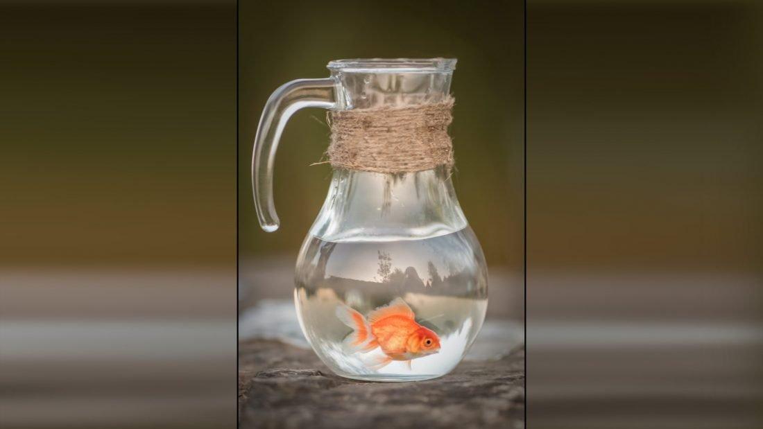 Pez de color dentro de un jarrón lleno de agua.